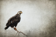 Winged Eagles Posters - Into the Mist Poster by Reflective Moments  Photography and Digital Art Images