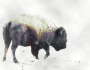 Bison Photos - Into the Storm by Ron  McGinnis