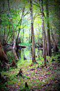 Cypress Knees Photos - Into the Swamp by Carol Groenen