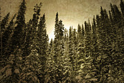 Winter Photos Prints - Into the Woods Print by Andrea Hazel Ihlefeld