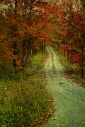 Country Road Mixed Media Prints - Into The Woods Of Fall Print by Deborah Benoit