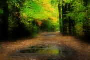 Photos Of Autumn Digital Art - Into the Woods by William Carroll