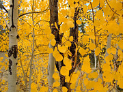 Yellow Leaves Metal Prints - Introspection Metal Print by Theresa Baker
