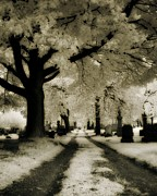 Gothic Graveyard Prints - Invisible Light Print by Gothicolors And Crows