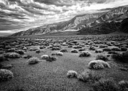 Owens Valley Art - Inyo Mountain Morning in Black and White by Troy Montemayor