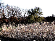 Cornfield Photos - Iowa Cornfield by Marsha Heiken
