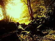 Melanie Cochrane-fallon Metal Prints - Ireland- Sun seeps into dark little woods- Galway Metal Print by Melanie Cochrane-Fallon