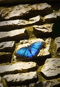 Botanica Photos - Iridescence-on-Rocks by Fred Lassmann