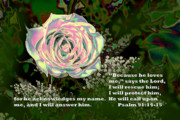 Bible Digital Art Prints - Iridescent Rose Ps.91 v 14-15 Print by Linda Phelps