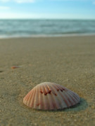 Seashell Fine Art Posters - Iridescent Seashell Poster by Juergen Roth