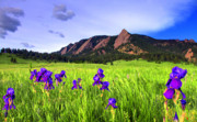 Flatirons Posters - Iris and Flatirons Poster by Scott Mahon