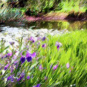 Iris Print Prints - Iris and Water Print by Linde Townsend