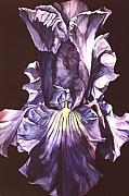 Faa Painting Prints - Iris At Night Print by Alfred Ng