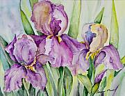 Carolyn Bell - Iris Beauties