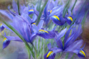 The Art Of Carol Cavalaris Prints - Iris Bouquet Print by Carol Cavalaris