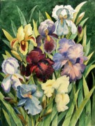 Smith Painting Originals - Iris Collection by Marilyn Smith