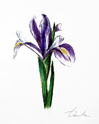 Green Foliage Drawings Prints - Iris Print by Danuta Bennett