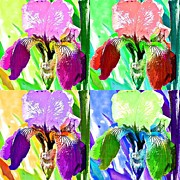 Iris Digital Art Prints - Iris Four Times Print by Fraida Gutovich