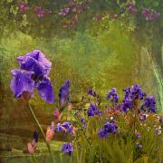 Artistic Digital Art - Iris Garden by Jeff Burgess