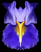 Iris Print by Gary Zuercher