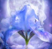 Bearded Iris Framed Prints - Iris - Goddess In The Moonlite Framed Print by Carol Cavalaris