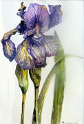 Green Drawings Originals - Iris in Bloom by Mindy Newman