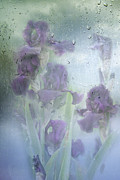 Purple Iris Photos - Iris In The Spring Rain by Diane Schuster