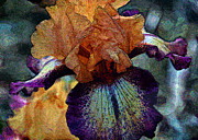 Purple. Iris. Buds Prints - Iris Intimacy Print by Angelina Vick