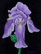 Flower Pastels - Iris by Mendy Pedersen
