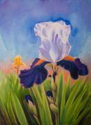 Watercolor Pastels Originals - Iris Morning by Sandra Lynn
