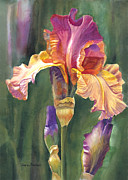 Realistic Watercolor Prints - Iris on the Warm Side Print by Sharon Freeman