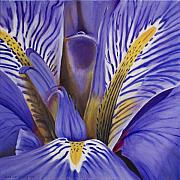 Photorealism Painting Posters - Iris Poster by Rob De Vries