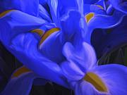 Blue Flowers Posters - Iris Sparkle Poster by Roxy Riou