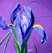 Flower Tapestries - Textiles Prints - Iris Print by Sylvie Heasman