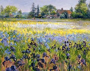 Landscape Plants Prints - Irises and Two Fir Trees Print by Timothy Easton