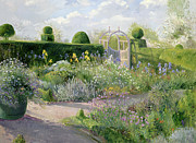 Border Painting Prints - Irises in the Herb Garden Print by Timothy Easton