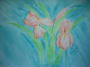 Apricot Originals - Irises by Janine Boe