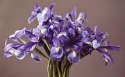 Irises Print by Kurt Forschen