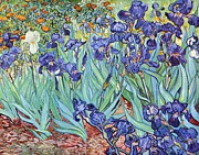 Van Gogh Painting Framed Prints - Irises Framed Print by Pg Reproductions