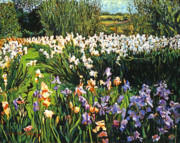 Fields Of Flowers Paintings - Irises Provence by David Lloyd Glover