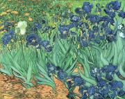 Plants Paintings - Irises by Vincent Van Gogh