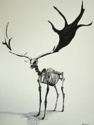 Doe Drawings Posters - Irish Elk Skeleton Poster by Steven Frost