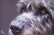 Wolfhound Framed Prints - Irish eyes Framed Print by Elena Kolotusha