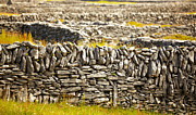 Divided Prints - Irish fences Print by Gabriela Insuratelu