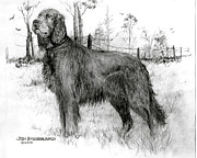 Jim Hubbard Prints - Irish Setter Print by Jim Hubbard