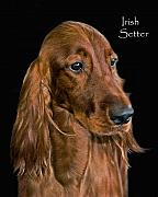 Irish Setter Posters - Irish Setter Poster by Larry Linton