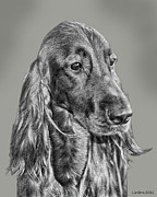 Irish Setter Posters - Irish Setter Portrait Poster by Larry Linton
