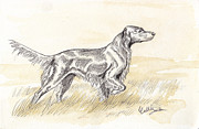 Setter Pointer Art Framed Prints - Irish setter sketch Framed Print by Callie Smith