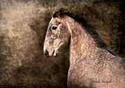 Livestock Digital Art - Irish Sport Horse by Dorota Kudyba