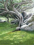 Green Grass Pastels Originals - Irish Tree Ring of Kerry by Joan Swanson